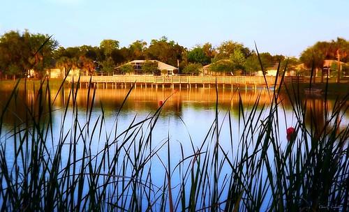 lakeatsunset reedcanallake reedcanalpark southdaytonaflorida sunset grass bridge lake water scenic trees landscape