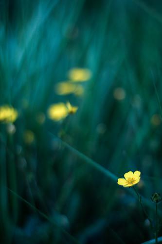 Summer's Dream   by y_egan