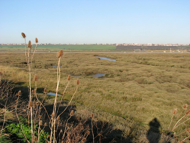 Marhes on Canvey Island