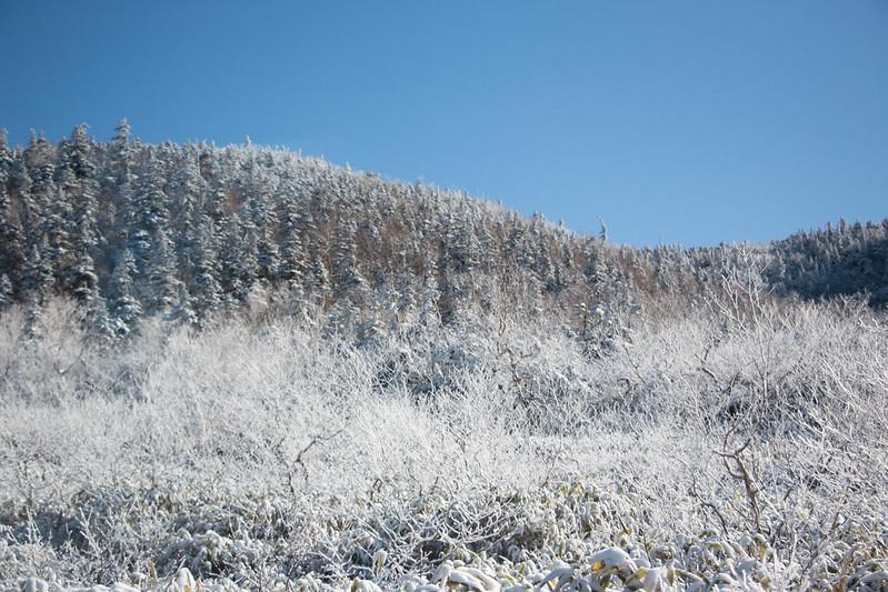 立山の霧氷の木々