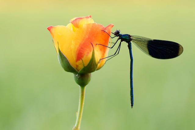 Fleur Magique 2...