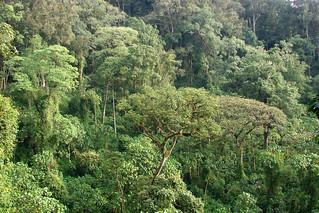 Landscape | Landscape of rainforest in Uganda. Photo by ...