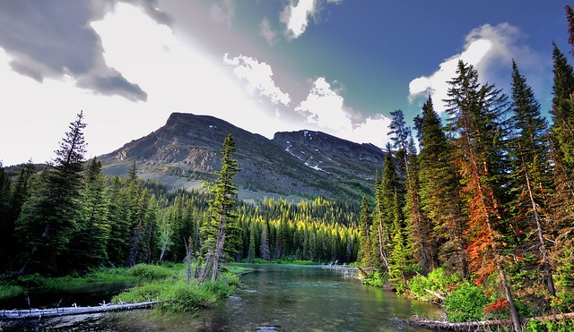 A Creek, Forest and Mountains to Take in Glacier National Park