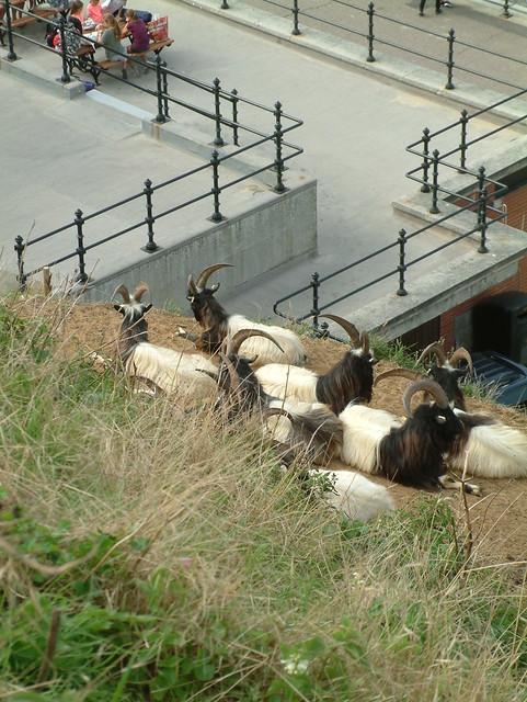 The Goats get a Summer Job - 3