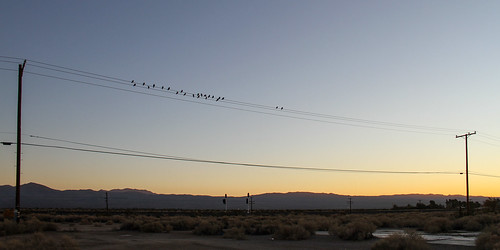 2011 usa sunset pole bird landscapes california yermo rail