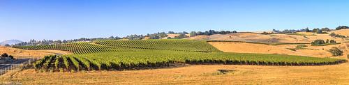 california santarosa sonomacounty hillside landscape trees vineyards crainecreekregionalpark wines grapes summer late afternoon