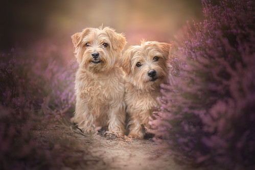 Dog Photography Worshop in Surrey, United Kingdom 19-20 August 2018 | by Alicja Zmysłowska