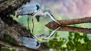 Double Vision | by Phocal Art