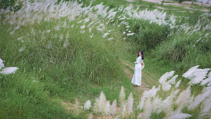 co lau duoi ga - Linh Van Dinh (16)