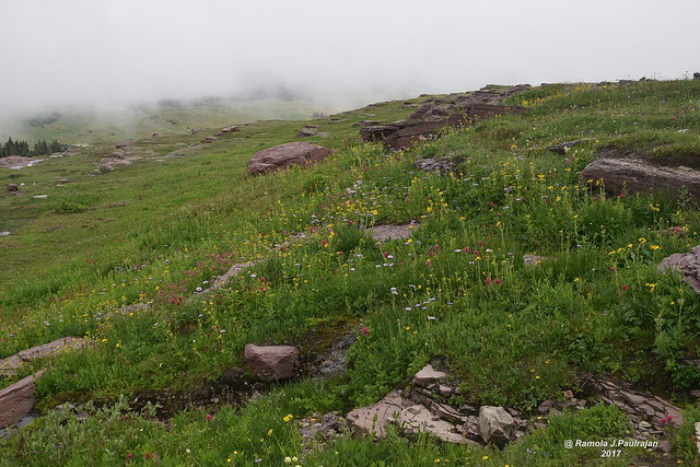 Foggy day in Glacier National Park - Explore