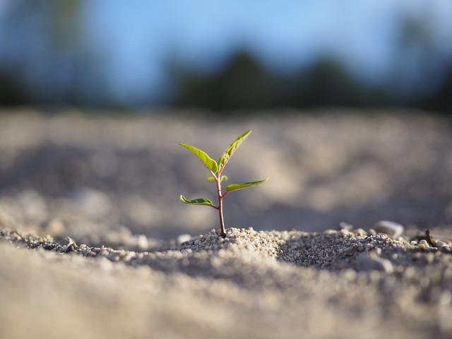 © Growth Grow Hope Optimism Live Life Nature Plant – Wachsen Wachstum Hoffnung Optimismus Leben Natur Pflanze Jungpflanze Keimling