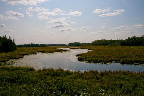 roadtrip landscape lanarkcounty water creek bog