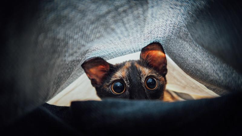 是誰在那裡?|大ㄟ