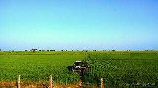 Fields enroute Bundi | by wanderingjatin
