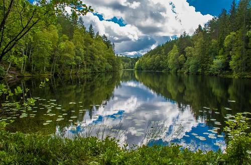 water lake pond tarn marsh trees forest spruces sky clouds langevann linderudkollen kjelsås marka lillomarka oslo norway calm tranquil