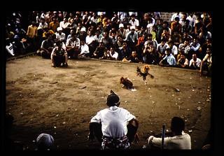 MAS寺の境内の一角で斗鶏