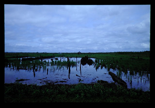 Soils And Agriculture Of Lowland Swamp Of Kalimantan = カリマンタン低湿地の土壌と農業