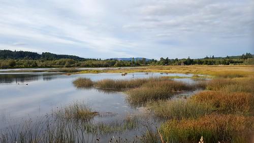 hoodcanal wetland thelerwetlands belfair galaxys6 cloudsstormssunsetssunrises tide saltwatermarsh