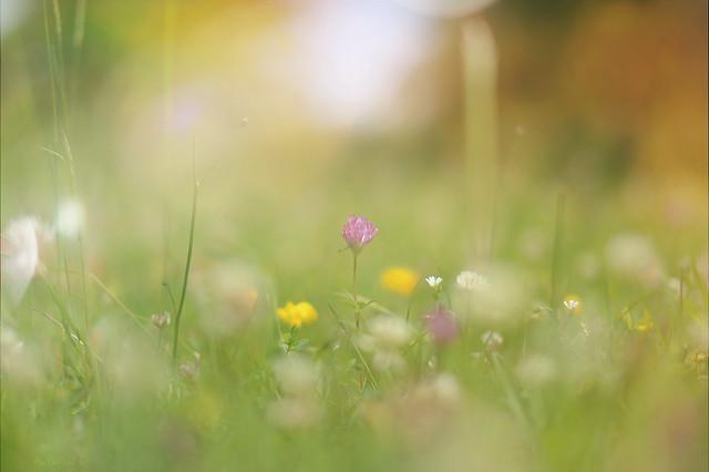 Clover Meadow..