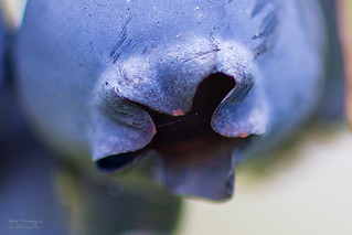 Blueberry (Explored) | by Normann Photography