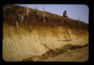 熱帯火山灰土壌の特性