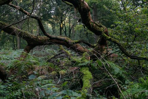 xt20 morning forest woods tree moss tokina 28 f28 fuji fujifilm sunrise specular