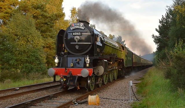 A1 Pacific Locomotive No.60163 'Tornado' storming through Thetford Forest, with 'The Easterling' tour returning to London Kings Cross from Great Yarmouth. 28 08 2017
