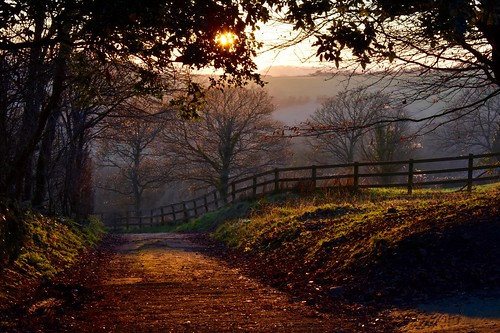 nature landscape lane fence hff happyfencefriday england southstoke field trees sunset goldenhour winter countryside