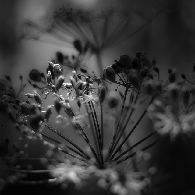 Summer Wildflowers 045