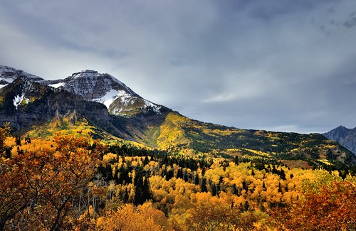 alpineloopdrive alpineloopscenicbackway americanforkcanyon aspenleaves aspentrees aspens autumn autumnleafcolors canvas capturenx2edited centralwasatchrange cloudy cloudyday colorefexpro day6 evergreen hillsideoftrees hillsides landscape leafcolors mountain mountains mountainsindistance mountainsoffindistance nature nikond90 outside overcast portfolio project365 rockymountains rollinghillsides snowcapped trees utahhwy92 wasatchrange westernrockymountains provo utah unitedstates