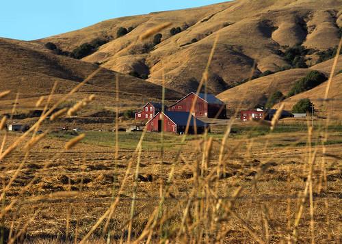 california us farmlife stevenpmoreno outdoor nature stevenmorenospix2017 hills touristpictures agriculture nikond7100 marincounty hay field