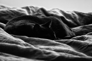 Carl in a Sea of Blanket Waves | by lennycarl08