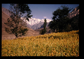 Traditional Cultivation Of Foxtail Millet In Northern Mountain's Of Pakistan = パキスタン北部山岳地域のアワ栽培
