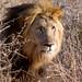 Safari Madikwe Private Game Reserve, South Africa