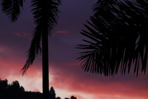 canon 55250mm sunset palmtree fire silhouette silueta atardecer 55250mmf456isstm dusk sky red nature tree outdoor contrast
