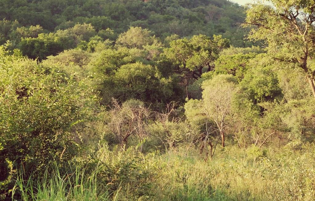 The bush in Pilanesberg