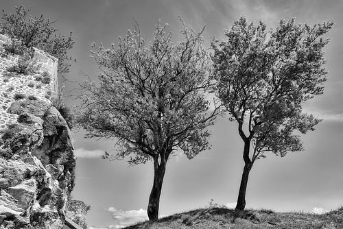 trees grass landscape outdoors noperson stone sky knin croatia nikon nikond750 nikkor283003556 gazzda hrvojesimich