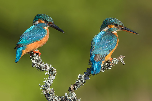 Mr and Mrs Kingfisher