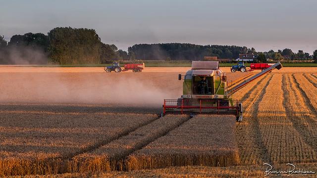 Harvesting at golden hour