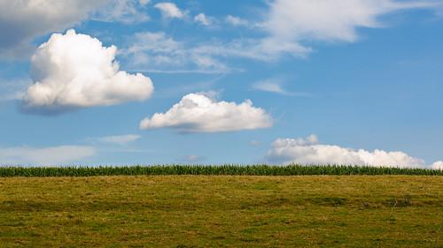 clouds field herb landscape nature sky wallpaper