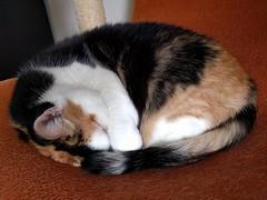 sleepy Poek