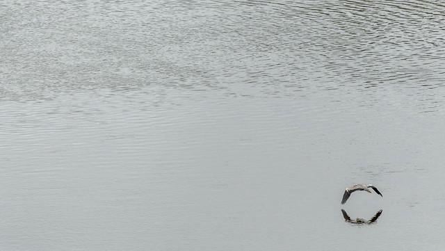 garza volando rio