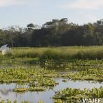 Viajefilos en la Amazonia, Peru 143