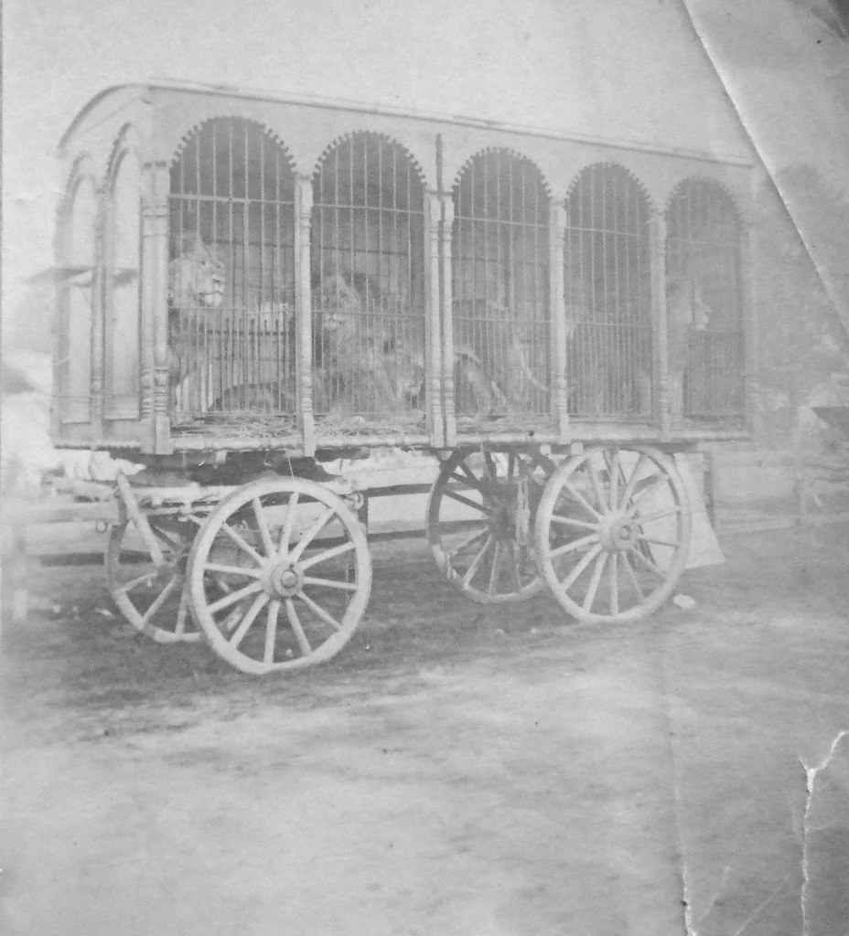 Lions in a Circus Carriage
