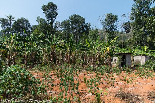 chotty kerala pentaxk5mkiis southindia roadviews smcpentaxda1650mm