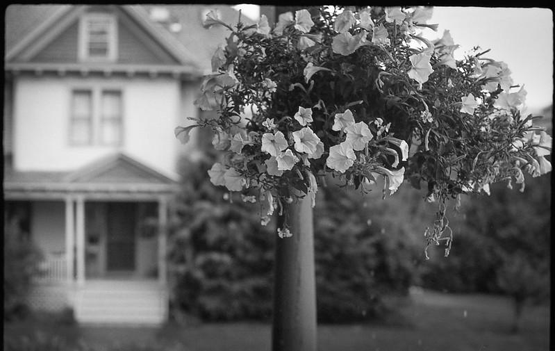 hanging plant, porch, light rain, Beech Street, Rockland, Maine, FED 4, Industar 50mm f-3.5, Ilford FP4+, Moersch Eco Film Developer, 8.18.17