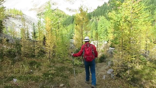 Pocaterra Ridge - Alpine Larch Hike - Intro movie
