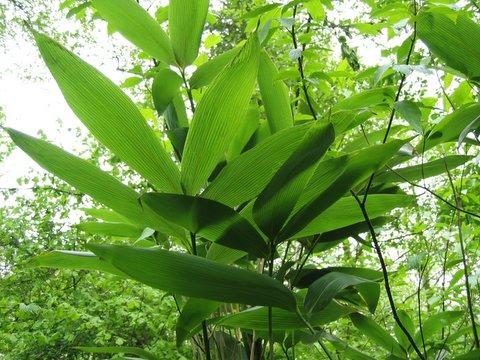 tall plants