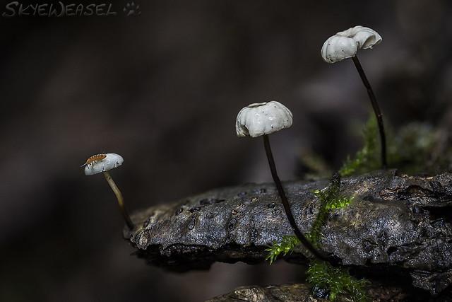 Arrrh! Mushroom Pirates