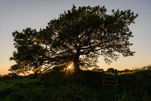 unitedkingdom hedge england westcountry sonnenuntergang himmel sky sunset baum cornwall uk tree gb